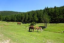 Cavalls i poltres en un marcat ambient pastorívol.