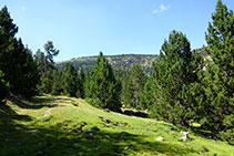 El sender, a vegades desdibuixat, enfila cap al NO, entre el llom i el fons de la vall.