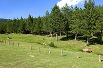 El pastoral riu de la vall de les Comes de Rubió.