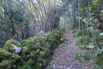 Camí definit amb parets de pedra seca.