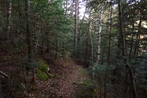 Bosc del Ròdol.