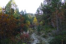 Entrem en una zona boscosa.