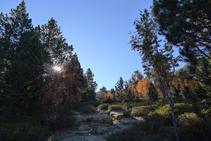 Colors de tardor al bosc.