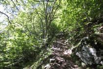 Pujada dura a través d´un bosc ombrívol.