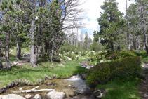 Creuem el riu saltant de pedra en pedra en una zona poc profunda.