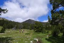 Bonic prat d´alta muntanya amb el pic de Perafita al fons.
