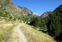 Comencem la ruta caminant per una pista forestal molt còmode seguint el GR 11-20.