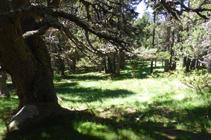 El bosc de Campeà, on el camí es perd.