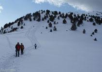 A més de 2.000 metros d´altitud trobem pocs arbres i abunden sobretot els prats alpins.