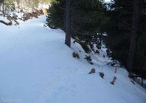 Creuem la pista i seguim pel sender del bosc, el Pla de la Creu de Fumanya està ja molt a prop.