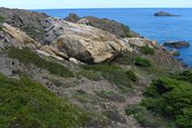 Esquistos (de color gris) i pegmatites (blanques i ataronjades) al Parc Natural del Cap de Creus.