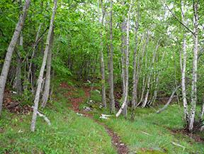 GR 11 - Etapa 18: �reu - Tavascan