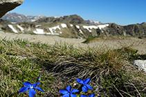 Flors d´alta muntanya.