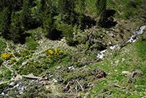 El riu Cebollera i pontet de fusta que el creua.