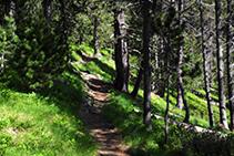Camí per l´interior del bosc.