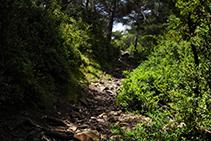 Zona boscosa abans d´arribar al coll de Jovell.