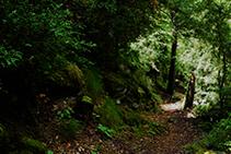 Caminant pel bosc d´Enclar.