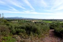 Màquies al Montpedrós.