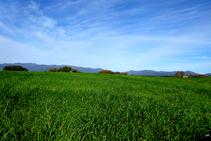 Camps de cereals prop de Peralada.