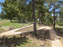 El camí puja fent llaçades per entre un bosc de pi negre.