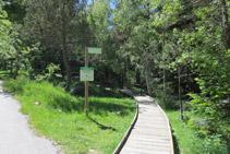 El camí s´endinsa cap al bosc.