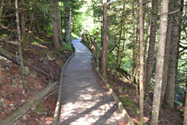La passarel·la adaptada creua un bosc d´avets.