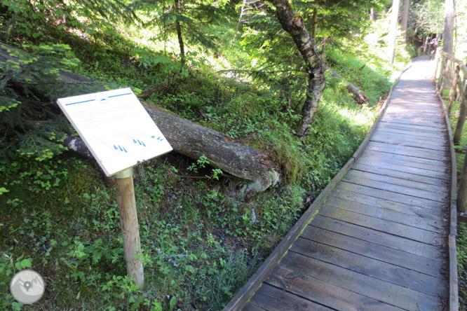 Itinerari adaptat del pont de la Gorga 1