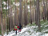 Itinerari pel Bosc de Virós