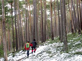 Itinerari pel Bosc de Vir�s