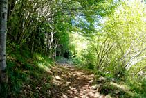 Típic bosc dels vessants ombrívols pirinencs.