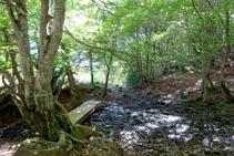 El camí del bosc de Carlac.