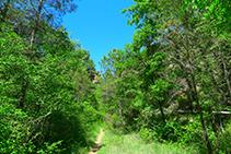 La vegetació és densa i abundant.
