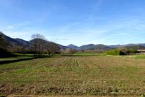 Rostolls de blat de moro a la vall de Bianya.