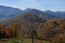 Rouredes de roure martinenc a la serra de Sant Miquel del Mont.