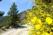 Bàlec a la vall de la Llosa.