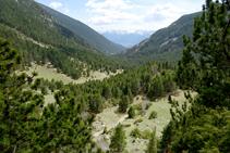 Davallant per la vall de la Llosa.