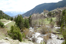 Bosc de ribera i ermita de la Mare de Déu dels Àngels.