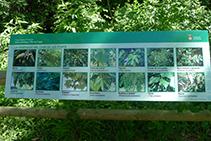 Panell amb imatges de la vegetació típica de la zona.