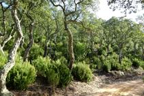 El paisatge del suro.