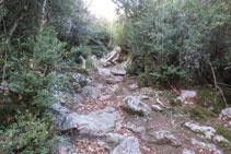 El camí es fa més dret i irregular.