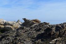 Roca amb una forma ben curiosa. S´assembla a una foca?