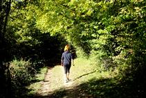 Caminant a l´ombra del bosc caducifoli.