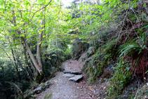 Bosc a la riba del Garona.