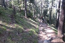 Caminant per l´interior del bosc.