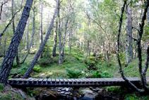 Pont del barranc dels Forcats.