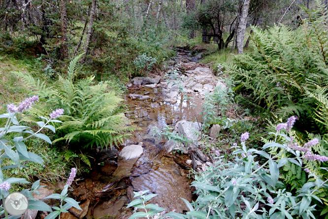 Pels boscos de Sant Joan de l