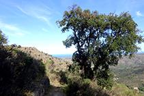 El camí antic que comunicava la Selva de Mar amb Sant Pere de Rodes.