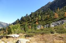 El bosc de pi negre i arbres caducifolis tenyit de tardor.