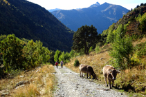 Després del refugi de Sorteny, baixem còmodament per la pista fins a l´aparcament del Parc Natural.