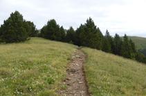 Prats de muntanya amb fonoll.